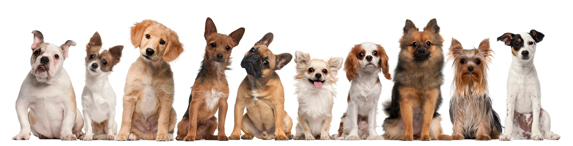 Dogshog Group
