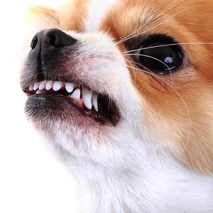Aggression, Dog Aggression, Dog Behavior