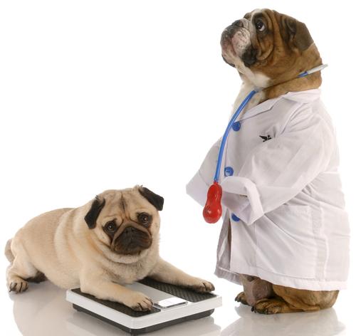 Pets Dog obesity