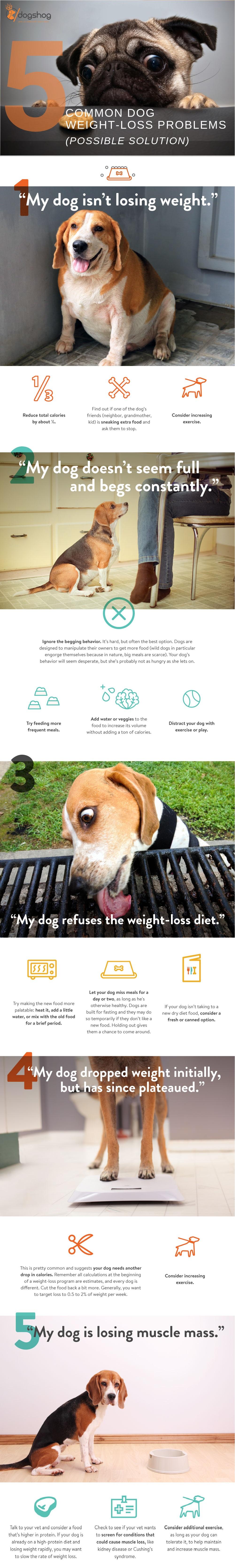 dog-weight-loss-chart, dog-weight-loss-chart information